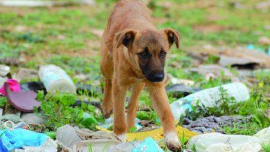 Photo of شينزين أول مدينة صينية تحظر أكل الكلاب والقطط بعد تفشي كورونا