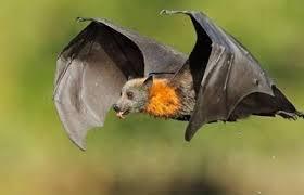 Photo of مصر.. مطاردة كبيرة للخفافيش وقتلها بطريقة مبتكرة
