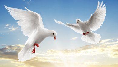 Photo of اليوم العالمي للعيش معا في سلام…  إسهام الجزائر فيالتأسيس لثقافة السلم