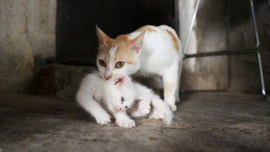 Photo of الكشف عن القصة الكاملة لفيديو تعذيب قطة بشكل وحشي على يد فتاتين بعد الضجة الكبيرة في مصر