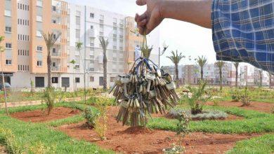 Photo of ناصري:توزيع عشرات الآلاف من السكنات بمناسبة الذكرى الـ 66 لإاندلاع الثورة المجيدة