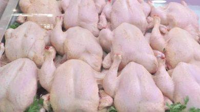 Photo of ضخ كميات معتبرة من الدجاج المجمّد لكسر الأسعار في الأسواق