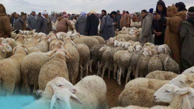 Photo of فيدرالية المواليين تتوقع انخفاض أسعار المواشي بسبب الكورونا