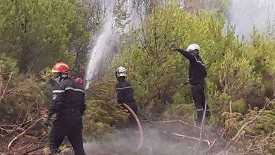 Photo of إخماد حريق غابة بني حارث ببلدية تلعصة في الشلف