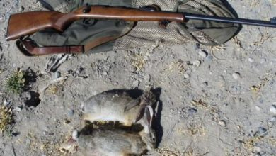 Photo of بعد 25 سنة من التجميد بسبب الوضع الأمني … عودة نشاط الصيد البري في الجزائر