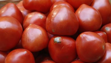 Photo of روسيا تحظر استيراد طماطم من المغرب