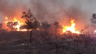 Photo of حرائق متزامنة بغابات مداغ، كريستل وطافراوي…  ألسنة النيران تتلف أزيد من 210 هكتار من الغابات بوهران