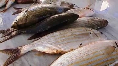 Photo of ثمن السردين يواصل الارتفاع إلى 1000 دج … أسماك بنوعية رديئة تسوق بغير إسمها