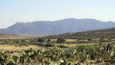 Photo of خلال عملية تمشيط بجبال المغيلة… مقتل 4 جنود تونسيين إثر انفجار لغم أرضي