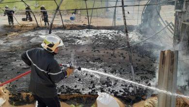 Photo of الوادي: نفوق مئات الدواجن خلال حريق بيت بلاستيكي
