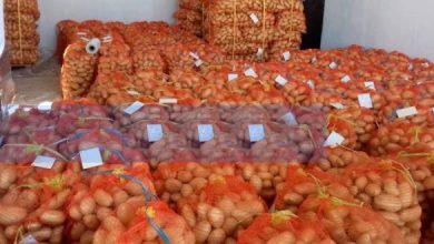 Photo of إخراج 10 آلاف طن من البطاطا وتوزيعها على أسواق 14 ولاية