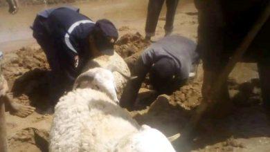 Photo of البيض: الحماية المدنية تنقذ قطيع من الأغنام من الوحل بدائرة الرقاصة