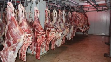 Photo of تضم 30 رأسا من الأبقار… انطلاق أول شحنة لحوم حمراء من تمنراست إلى العاصمة