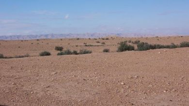 Photo of العثور على 5 جثث شباب تاهوا في الصحراء