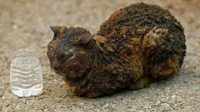 Photo of الفضاء البيطري الجزائري يطلق حملة لإنقاذ الحيوانات المتضررة من الحرائق