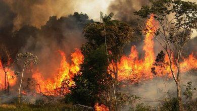 Photo of إجلاء 30 عائلة ببومرداس بسبب الحرائق